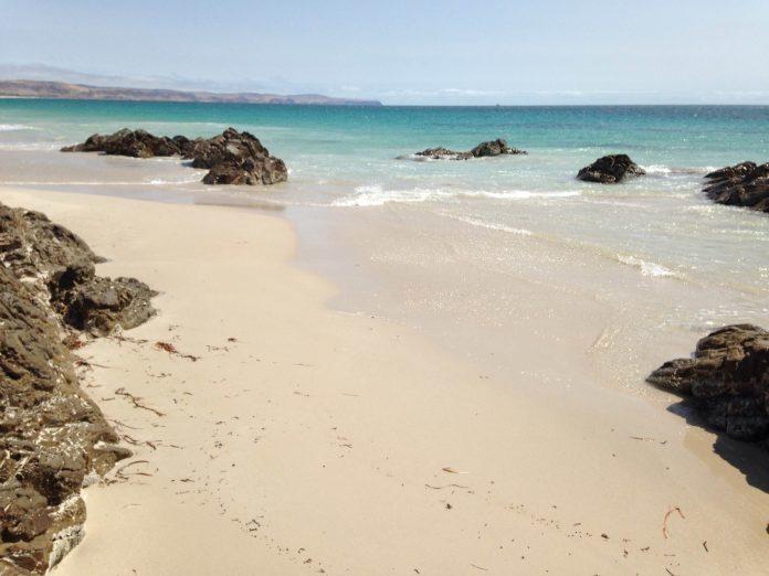 playa posidonia oceanica