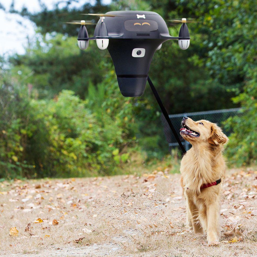 Drone dog walker