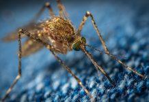 Tecnología y mosquitos